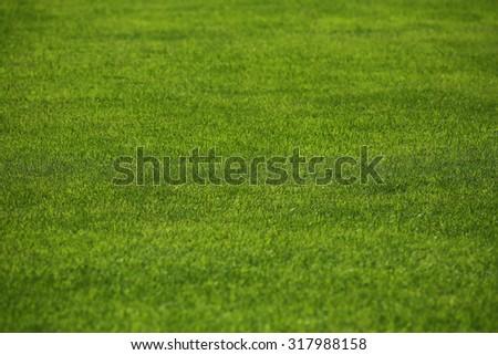 fresh green lawn. - stock photo