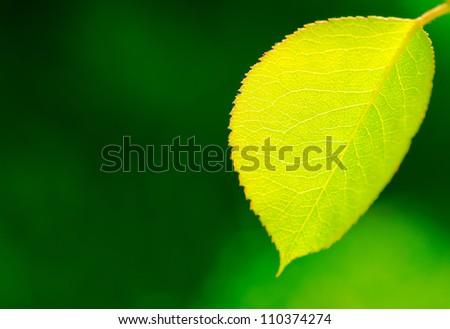 Fresh green leaf against blurred background - stock photo