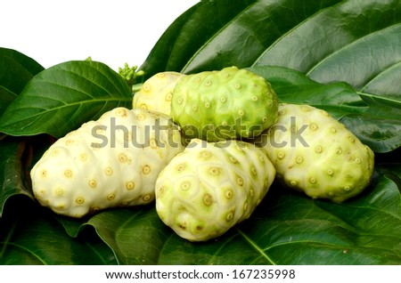 Fresh green leaf and fresh fruit of herbal food called Indian Mulberry or Noni (Morinda citrifolia  L.).