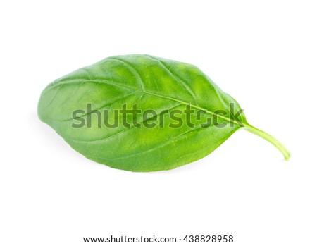 Fresh green leaf basil Isolated on white background - stock photo