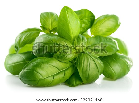Fresh green leaf basil. Isolated on white background. Illustration - stock photo