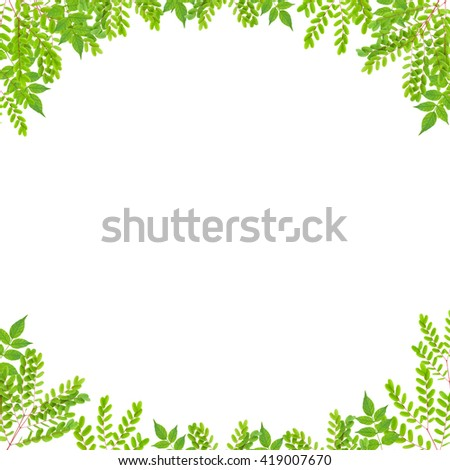 Fresh Green leaf frame isolated on white background