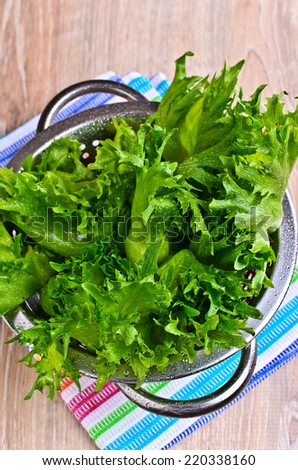 "Fresh green leaf lettuce ""frillis"" with water drops lie in a metal colander"