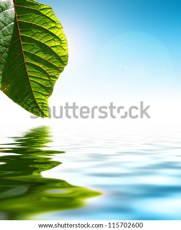 Fresh Green Leaf Over Water Background - stock photo