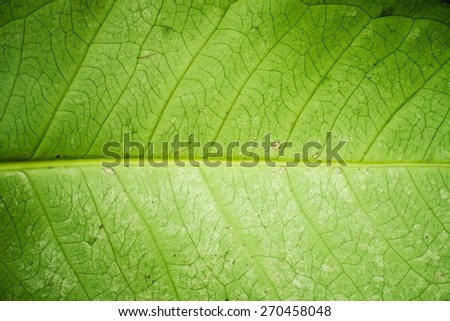 Fresh green leaf texture macro close-up - stock photo
