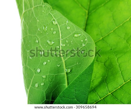 Fresh green leaf with drops on white background