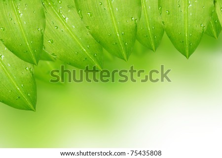 Fresh green leaf with water droplets background - stock photo