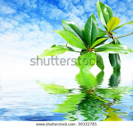 fresh green leafs on blue sky