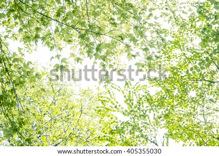 Fresh Green Leaves  - stock photo