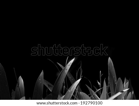 Fresh green leaves against a black background with moody lighting - stock photo