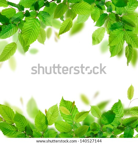 Fresh green leaves background texture - stock photo