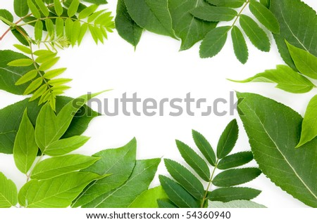 fresh green leaves border on white background - stock photo