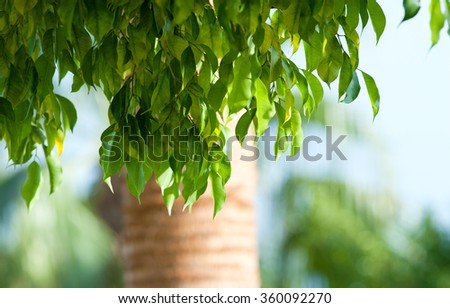 Fresh green leaves. Defocused background. - stock photo