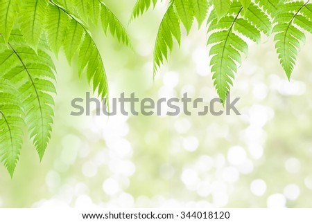 Fresh Green leaves frame isolated on nature background