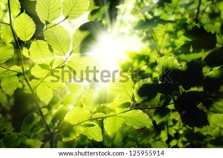 Fresh green leaves in a forest framing the sun in the middle and forming rays of light - stock photo