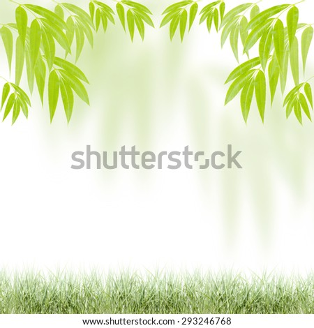 fresh green leaves   , natural green background.