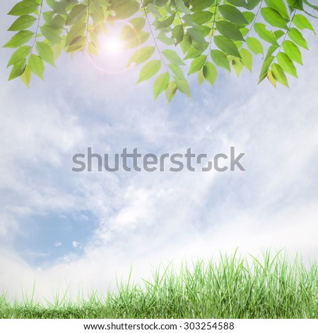 fresh green leaves ,natural green background .
