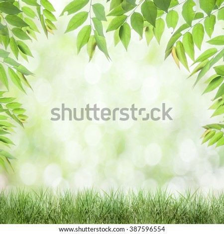 fresh green leaves , natural green background