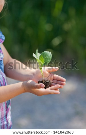 Fresh green leaves of a small plant seedling growing in soil cupped in a young girls hands, conceptual image