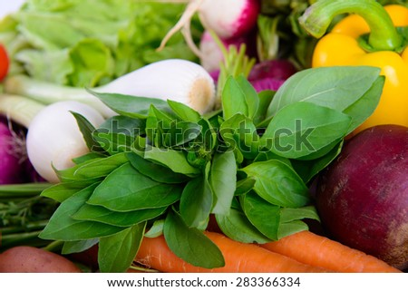 fresh green leaves of basil and vegetables - stock photo