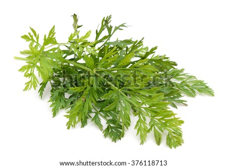 fresh green leaves of carrot isolated on white