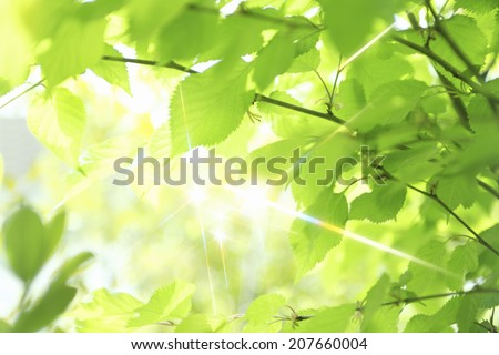 Fresh Green Leaves Sparkling