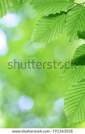 Fresh green leaves with smooth bokeh background in springtime