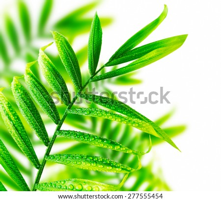 Fresh Green Leaves with Water Drops, Natural Green Leaves - stock photo