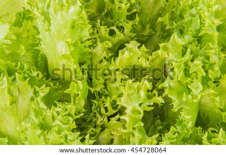 fresh green lettuce for healthy vegetarian food on entire background