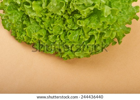 Fresh green lettuce salad on a beige background - stock photo