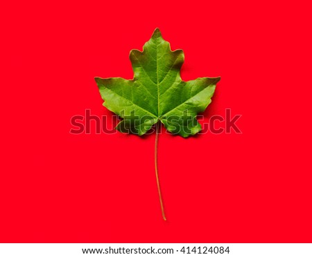 fresh green maple leaf on red background - stock photo
