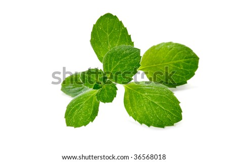 fresh green mint herb isolated on white background