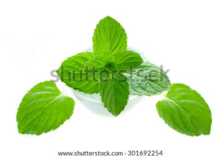 Fresh green mint leaves in a white porcelain dish