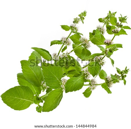 Fresh green mint with flower close up  shot isolated on white background - stock photo