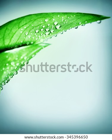 Fresh green natural border, leaf covered with dew drops over clear blue background, purity and harmony, spa concept - stock photo