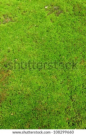 Fresh green natural moss background - stock photo