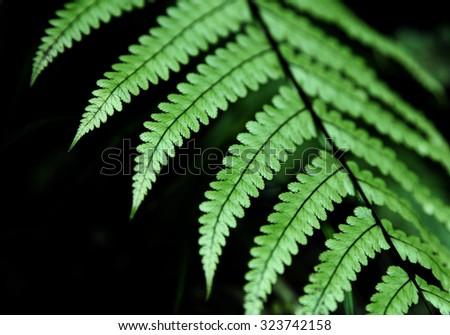 Fresh green New Zealand fern backgrounds - stock photo