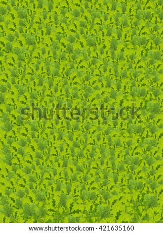 Fresh green oak leaves background