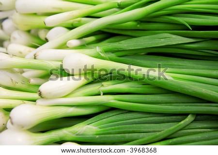 Fresh green onions - stock photo