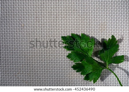 Fresh green parsley leaf on bright background with space for text or advert, top view