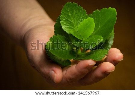 fresh green plant in female hand close-up