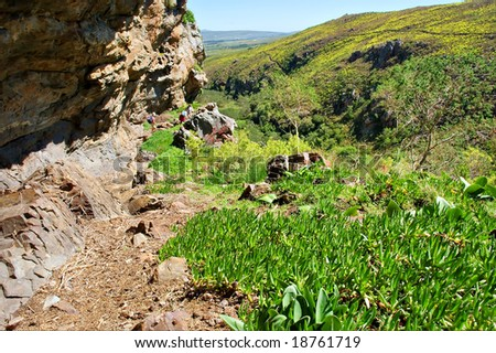 Fresh green plants under rock - and awesome mountain landscape as a background. Shot in Salmonsdam Nature Reserve, near Hermanus/Stanford, Western Cape, South Africa. - stock photo