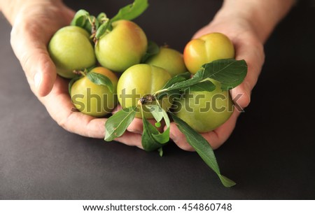Fresh green plums in senior hands - stock photo