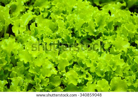 fresh green salad - stock photo