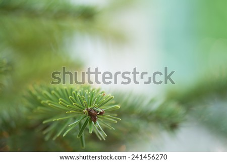 fresh green soft focus close-up of pine tree with copyspace - stock photo
