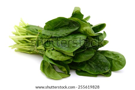 fresh green spinach on white background - stock photo