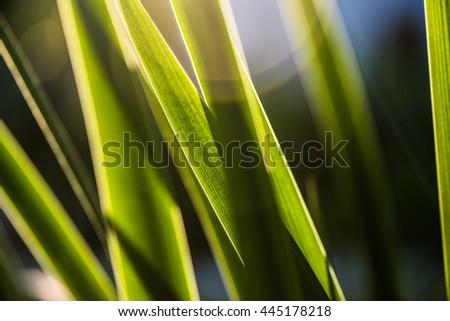 Fresh green spring grass - stock photo