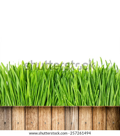 Fresh green spring grass with water drops and wooden fence on white background - stock photo