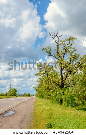 Fresh green spring trees at the side of a tarred rural road with power lines and fluffy white clouds in a sunny blue sky - stock photo