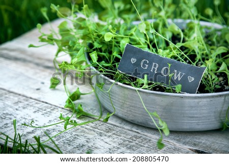 """fresh green sprouts with leaves growing in the garden at the pot with rustic wooden background with the black chalkboard sign """"Grow"""" - stock photo"""